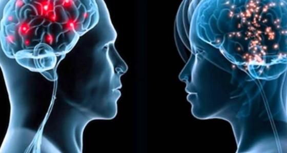 Valóban különbözik a férfi és a női agy?